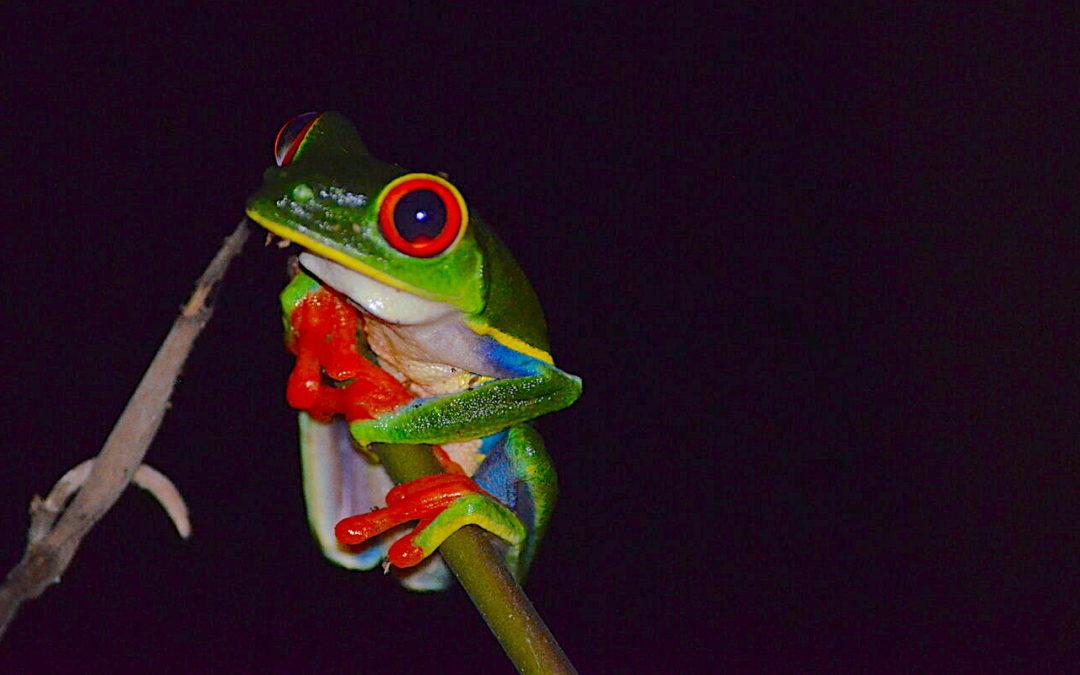 ESTACIÓN BIOLÓGICA LA SELVA en COSTA RICA